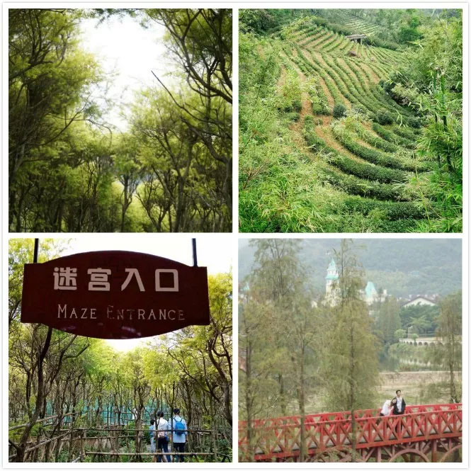 易网科技开展深圳东部华侨城2日团体游-与绿景作伴
